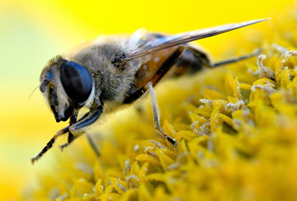 Под Тамбовом офицер и командование войсковой части судились из-за пчелы - «Новости дня»