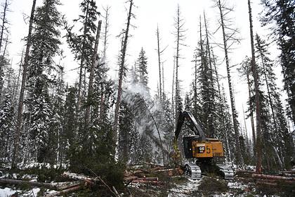 Россия потеряла миллиарды рублей на вырубке лесов - «Новости дня»