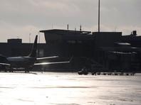 """""""Шереметьево"""" ведет расследование гибели двух котов, сданных в багаж на рейсе """"Аэрофлота"""" - «Россия»"""